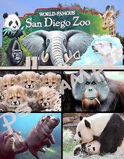 California - SAN DIEGO ZOO - Travel Souvenir Flexible Fridge Magnet