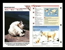 Mountain Goat Wildlife Fact File Mammal Animal Card Home School Study 1.315