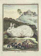 Antique framed copperplate engraving Rabbit Le Comte De Buffon Le Lapin d'Angora