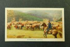 c1940 Hoadleys Trade Card Birth of a Nation 14 Mustering Cattle Australiana VGC