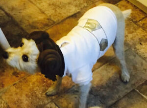PETCO Princess Leia Dog Costume XS - Adorable!