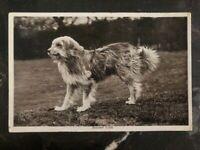 1911 England RPPC Postcard Cover To Winnipeg Canada Bearded Collie