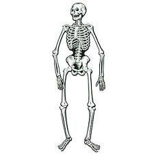 "Jointed Skeleton 55"""