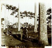 CAMBODGE Palmiers, Photo Stereo Vintage Plaque Verre ca 1910