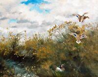 Mallards by Swedish  Bruno Liljefors. Bird Art  11x14 Print