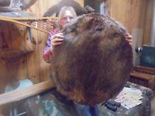 "47""#5 Adirondack Mt -Dark-2 Black Medium Beaver Pelt /Taxidermy/Fur/Fox/Coyote"