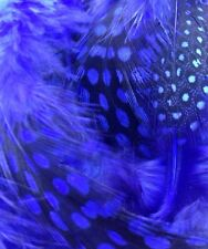 Lot of 50 Mixed 2-4 inch Natural Royal Blue Colored Spotted Guinea Feathers