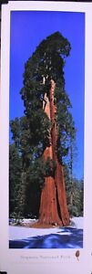 Sequoia National Park Giant Tree - Unframed, Blakeway Vertical Panorama Print