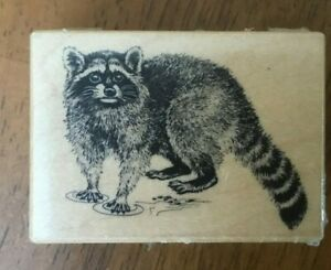 PSX Wild Raccoon animal in Water Wood Mounted Rubber Stamp D-580