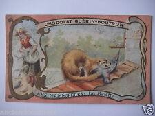 """CHROMOS ANNÉE 1890-1900 CHOCOLAT GUÉRIN-BOUTRON LES MAMMIFÈRES """" LA BELETTE """""""