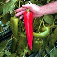 Sweet Pepper seeds vegetable Shrub Troll seeds ultra early