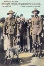 Australian Troops Egypt Bulldog Mascots Dec 1914- Feb 1915 Modern postcard