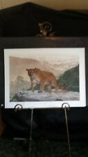 Shasta by Charles Frace' Cougar