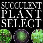 SucculentPlantSelect