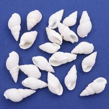 Lots 20 PCS Natural White Sea Shell Conch Decorations 12mm-17mm