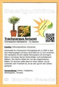 🌴 Trachycarpus fortunei, Chinesische Hanfpalme, 15 Samen
