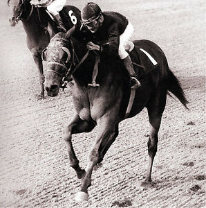 RARE REAL SEABISCUIT DVD FROM THE 1930's ACTUAL FILMS WAR ADMIRAL MATCH RACE