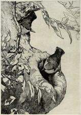 GEORGE EDWARD COLLINS (1880-1968) Signed Etching TWO BIRDS IN TREE