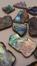 New natural Paua Shell 50g Raw approx 16 pieces - Medium for Crafts, arts etc.