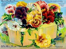 Maule's Prize Mixed Pansies Vintage Flowers Seed Packet Advertisement Poster