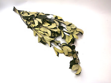 Preserved Whitebeam Sorbus Aria Alisier Leaves Green Leaf Dried flowers