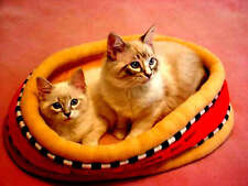 CAT LOVER PRODUCTS PET BED KITTY SOFT COZY RED LOUNGE RETREAT NEW LAST ONE!