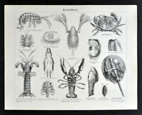 1875 Meyer Print Crustaceans Shrimp Crab Lobsters Muscle Seafood Marine Biology