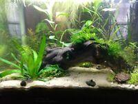 NO FLOATER Sampler 10 Species Low Tech Plant Live Freshwater Trims Aquarium Easy