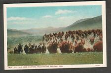 unmailed post card Buffalo Herd Stampede Yellowstone National Park/Haynes Shops