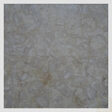 Limestone Wall&Floor tile, polished shell Reef Beige