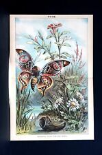 Escape from TAMMANY 1881 BUTTERFLY FLOWER GARDEN Tilden Hewitt Potter Robinson