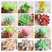 Cute Artificial Succulents Plant Miniature Fake Cactus DIY Garden Floral Decor