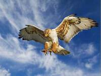 EAGLE HUNTING ATTACK PHOTO ART PRINT POSTER PICTURE BMP2304B