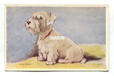 Sealyham terrier dog - old Tailwagger postcard, artwork by Mac
