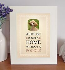 Poodle (Apricot) 8 x 10 A HOUSE IS NOT A HOME Picture 10x8 Dog Print Fun Gift
