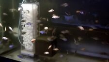 1 LITRE OF K1  MOVING BED FILTER MEDIA All Water Types