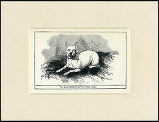 TOY / MINIATURE BULL TERRIER ANTIQUE ENGRAVING NAMED DOG PRINT READY MOUNTED