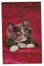 Vintage Cats Kittens Chrome Postcard Whiskers Gray and White with Green Bowtie