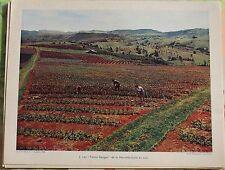 """1956 les """" Terres Rouges """" de la Nouvelle-Galle du Sud Australie"""