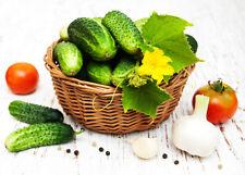 Gurken-Gemüsesamen mit den Sommer für volles Sonnenlicht