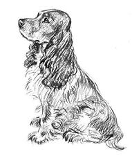 Dog - Canine - Spaniel - Sitting#2 Unmounted Clear Stamp Approx 52x60mm