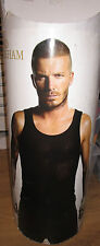 David Beckham  Poster - brand new - wrapped in tube  (#464)