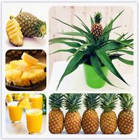 Ananas Comosus 100 Pcs Seeds Pineapple Bonsai Fruit Garden Sweet Potted NEW X Z