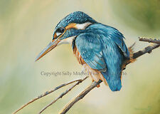 Kingfisher Ltd Edt Print by Ben Waddams - We won't be beaten on price! WADG-07