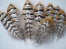 lot de 10 plumes faisan vénéré 5 a 7 cm