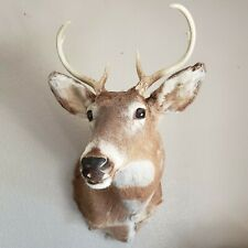 Vintage Shoulder Mount 7 Point Whitetail Deer Real Antler Taxidermy Tagged PA