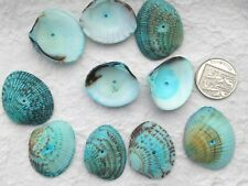 Seashell Beads Shells 10 Aqua Patterned Ribbed Shells With Drilled Hole