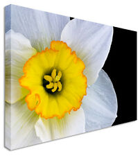 Daffodil Amaryllis Flower - Canvas Wall Art Picture Print