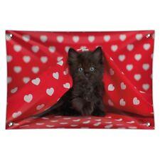 Black Ragdoll Tiffany Cat Kitten Hearts Love Home Business Office Sign