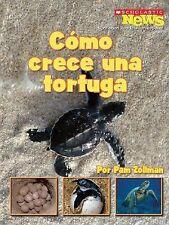 Como Crece Una Tortuga = A Turtle Hatchling Grows Up (Scholastic News Nonfiction